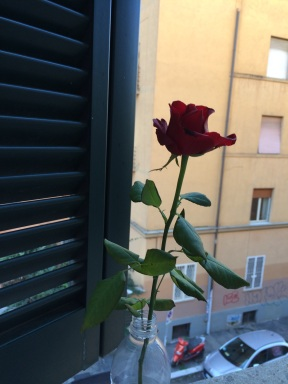 my window rose