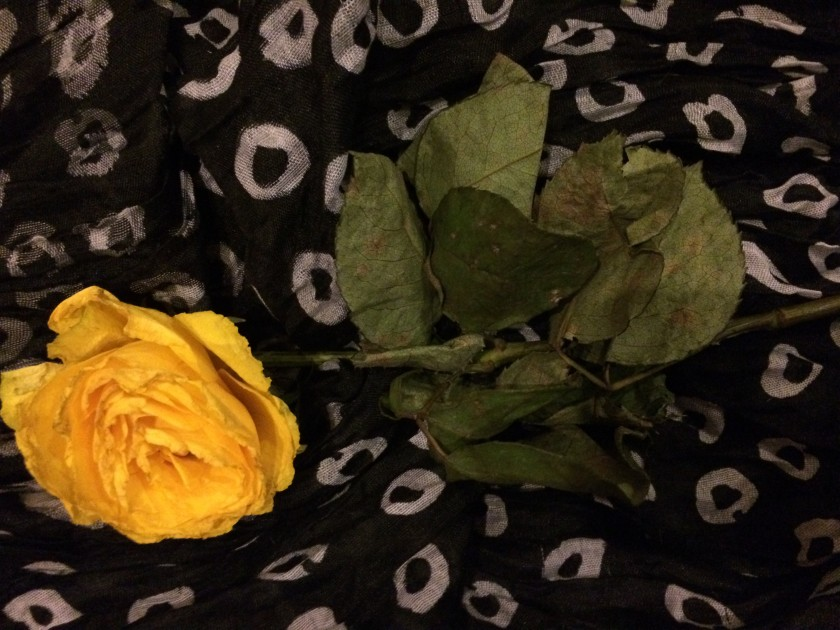 A yellow rose from a sweetie